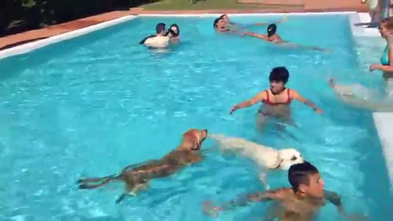 Dog Pool Hotel Virginia Rimini Youtube