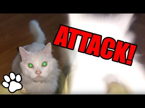 Cats Pouncing | Cat Videos | That Pet Life