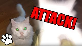 Cats Pouncing | Funny Animal Compilation 2018