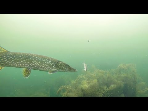 AMAZING Underwater Ice Fishing For Pike