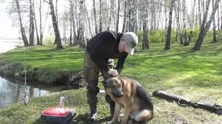 я и мой хвост.правильно чистим уши собаке.(канал существует на пожертвования зрителей. Paypal: medwed172@mail.ru., 2014-05-08T09:19:59.000Z)
