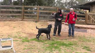 Kyle, Lab, Episode 17 (muzzle Training, Fear Aggression) - Sit Up N Listen Dog Training