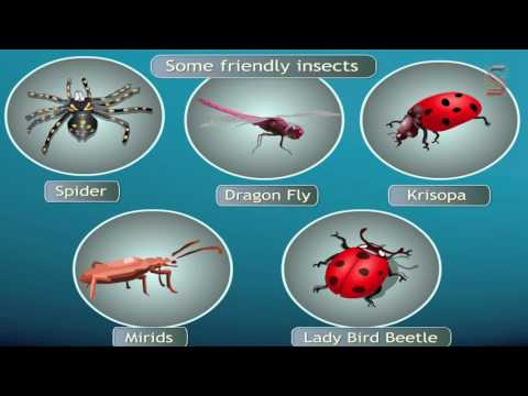 Challenges in improving agricultural products (Natural Pest Controlling Methods-14)