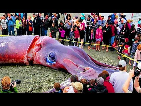 Fishing Fish And Big Sea Animals Tourists Catch Deep Sea Animal Boat Fishing