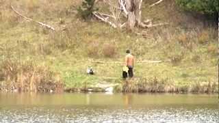 Man Releases Domestic Ducks At Markham Park