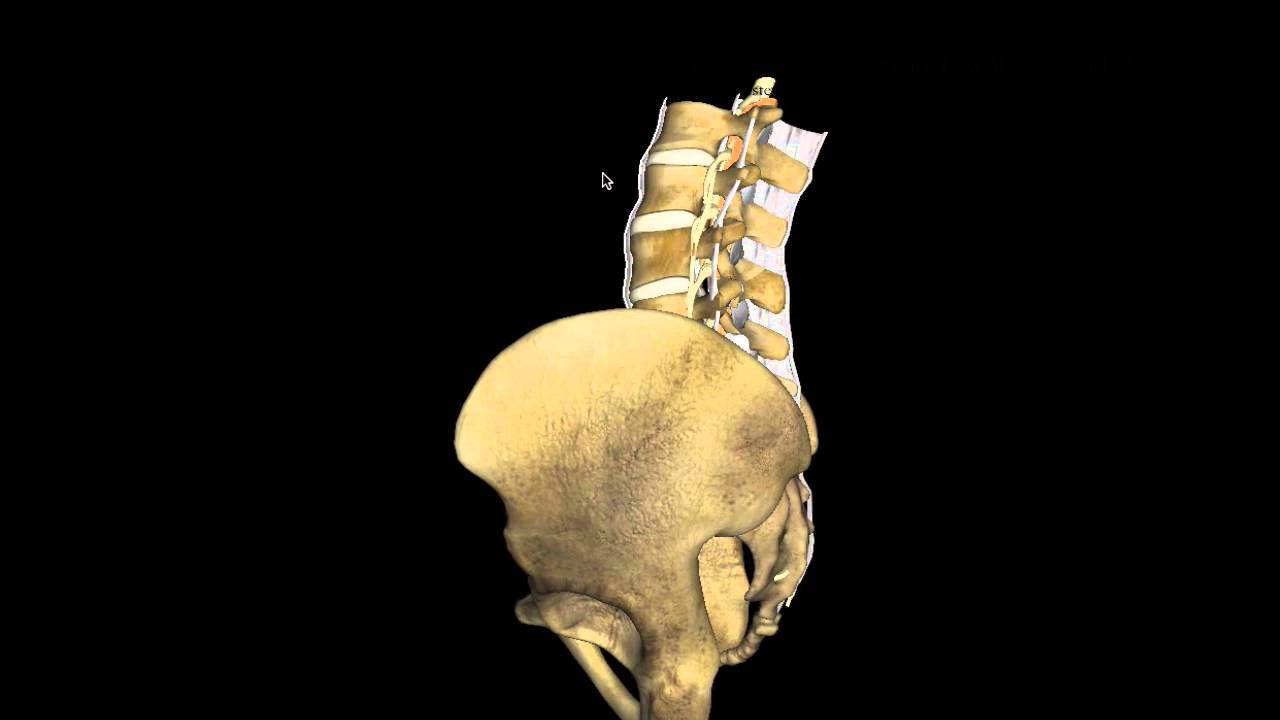 Acute Low Back Pain 1 Anatomy Youtube