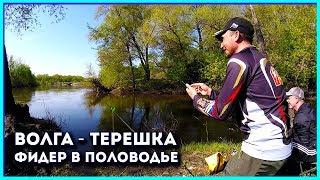 Волга - Терешка. Первый лещ. Рыбалка на фидер.