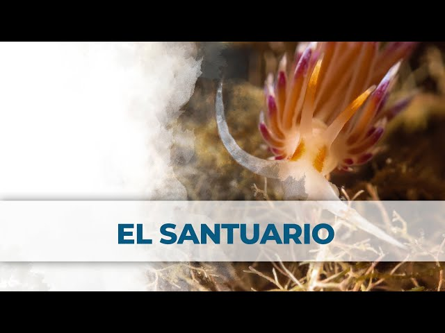 2 Little Divers | El santuario - Port Balis