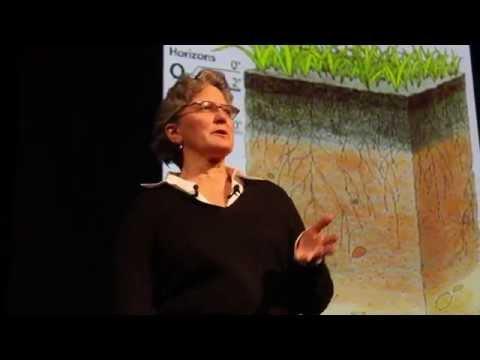 School Campus Stormwater Solutions - SustainabilityTALKS