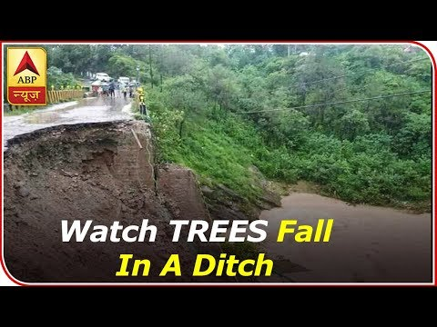 Shimla: Watch TWO TREES Fall In A Ditch As Soil Loosens Post Heavy Rainfall | ABP News