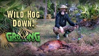 Bow Hunting: Sticking A Pig (#278) @GrowingDeer.tv