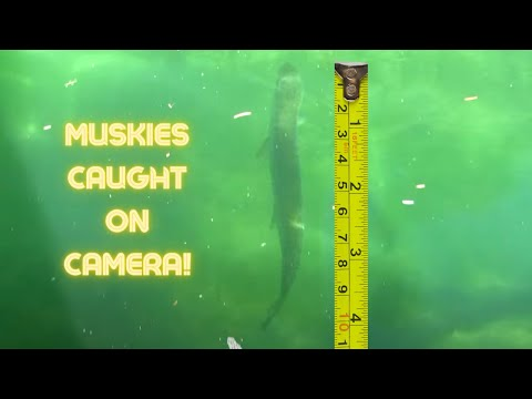 Merwin Reservoir Muskies