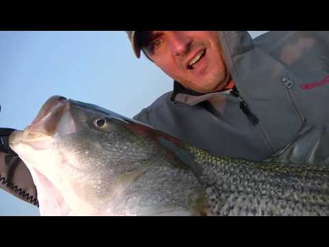 Hammering Big Striped Bass (Part 1) While Fishing Long Island Sound