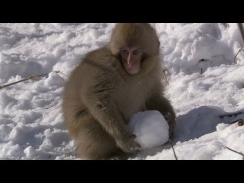 Trailer do filme Snow Monkey