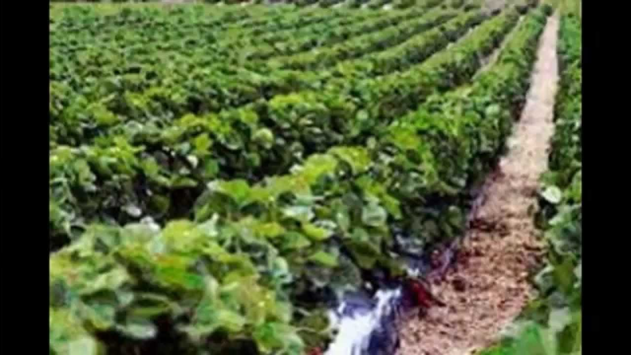 Бизнес идея сельхоз бизнес план директора банка