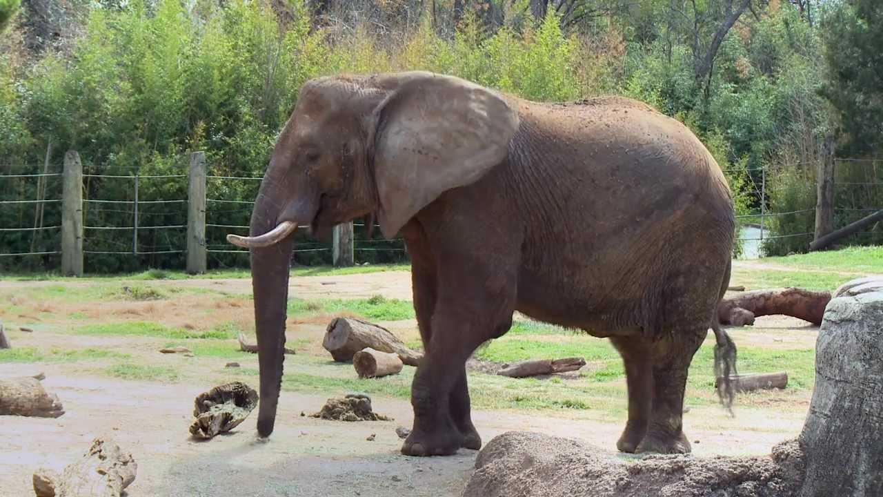 Zoo Waco TX