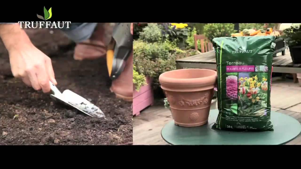 Comment planter des bulbes de printemps jardinerie - Bulbes a planter au printemps ...