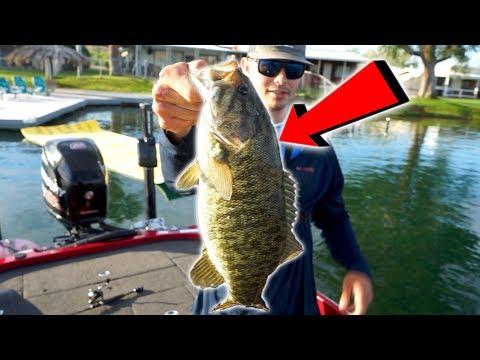 colorado-river-smallmouth-bass-fishing-|-california/arizona
