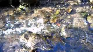 Plätscherndes  Wasser - Sounds of Running Water - No Music