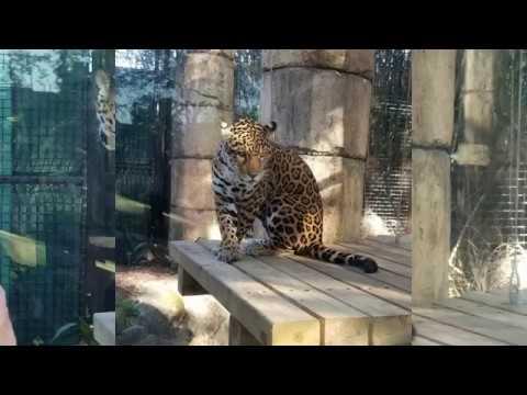 Adrian Long -  NOLA Public Schools/ Audubon Zoo Back To School Fest Saturday on 9/14/19