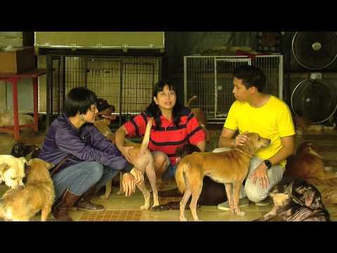 Urban: Adopsi Anjing