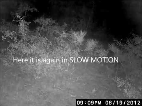 MYSTERIOUS and UNEXPLAINED creature lurking in the woods (with audio commentary)