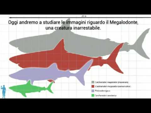 Il megalodonte esiste ancora yahoo dating 6