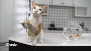 Catspiracy: Learn the truth about the PetSafe ScoopFree Litter Box thumbnail