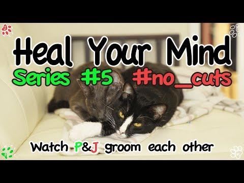 Relaxing Video HYM #5 - Cats groom each other Vol.2 (힐링영상 - 서로 그루밍하는 고양이들 2편)