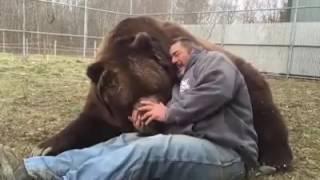 видео Домашний зверь