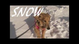 【MV風】愛犬と散歩に行きました。 thumbnail
