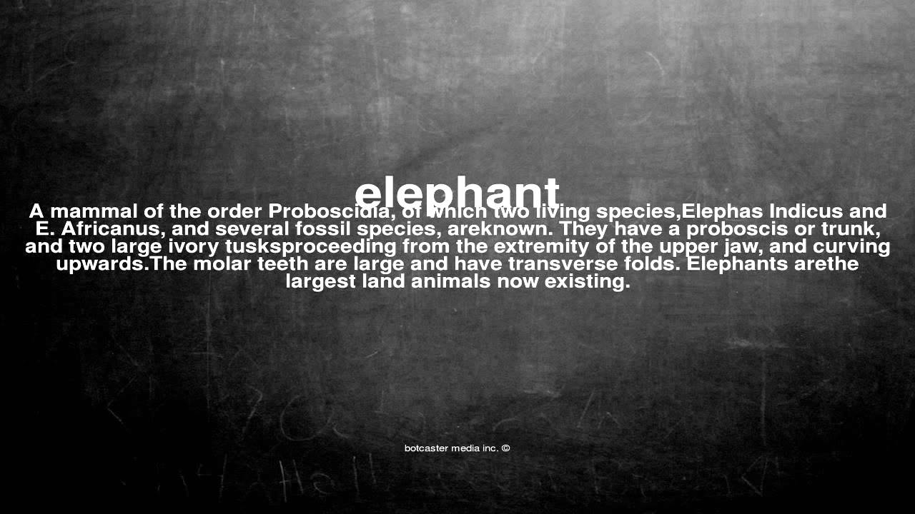 What Does Elephant Mean Youtube