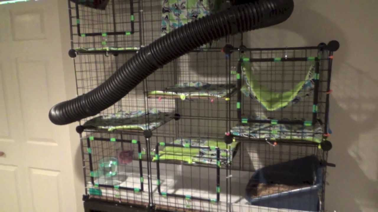 Ferret CampC Cage C And C YouTube