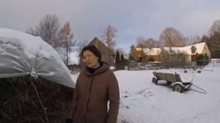 видео Сушка и хранение сена