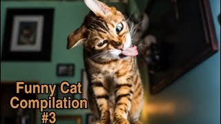Funny Cats Compilation | When The Catnip Kicks In