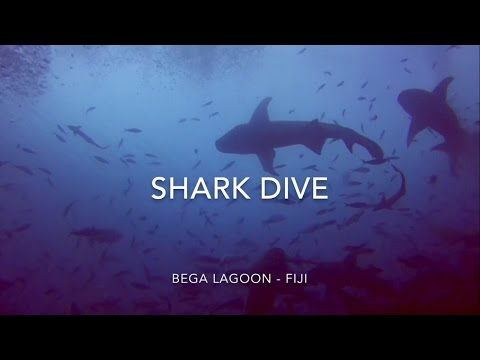 DIVING WITH THE WORLD'S MOST DANGEROUS SHARKS, WITHOUT A CAGE - Fiji Travel Vlog