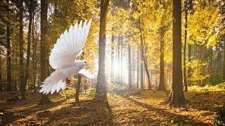 RAUS AUS ALTEN MUSTERN - Frei durch Vergebung