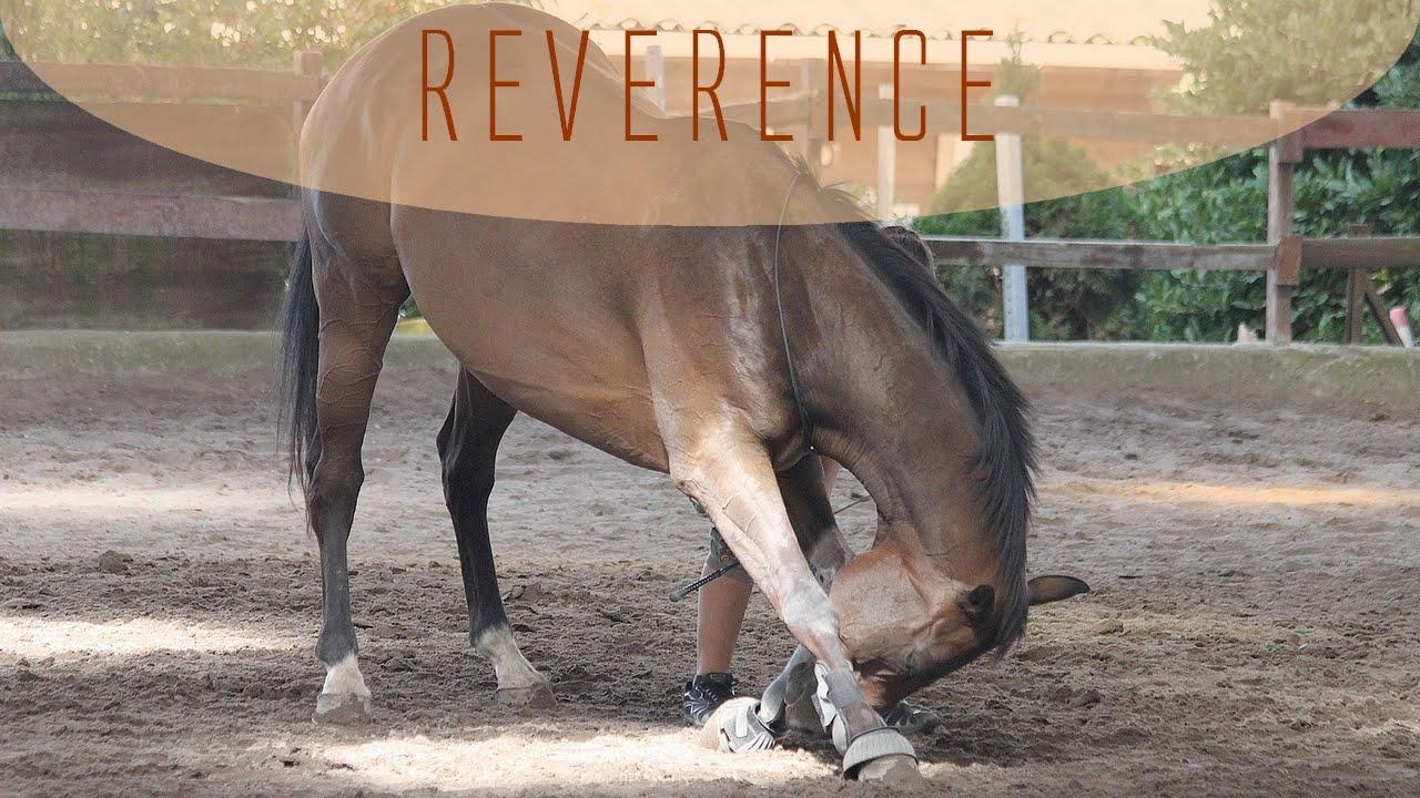 Apprendre la révérence à son cheval - YouTube