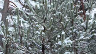 Свадебная зимняя прогулка.СЕВЕРОДВИНСК