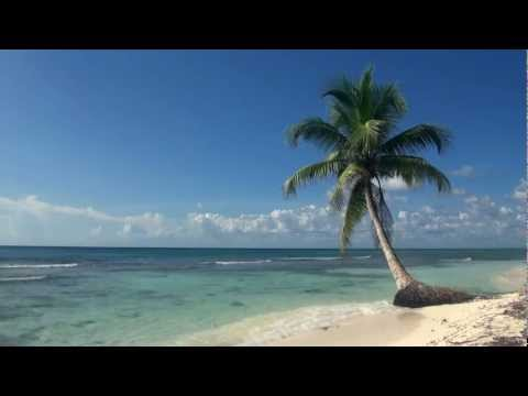 Relaxing 3 Hour  of A Tropical Beach with Blue Sky White Sand and Palm Tree