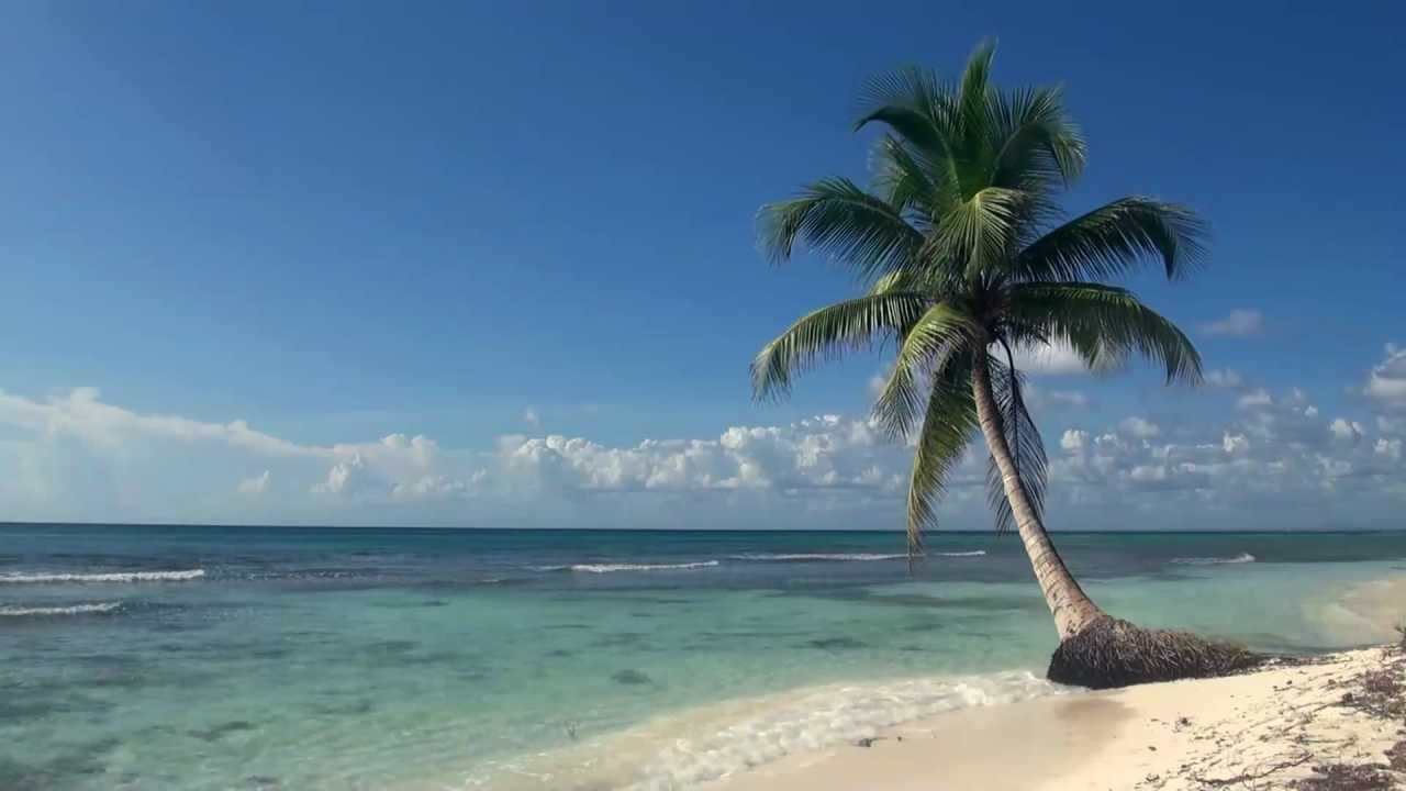 Palm Trees On The Beach: Relaxing 3 Hour Video Of A Tropical Beach With Blue Sky