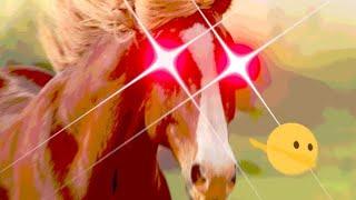 I got the horses in the back meme