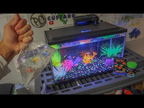 BUYING *NEW* GLO-FISH for AQUARIUM!!!