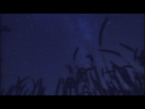 Nature in the Night - Nature hd video for meditation and relaxation.