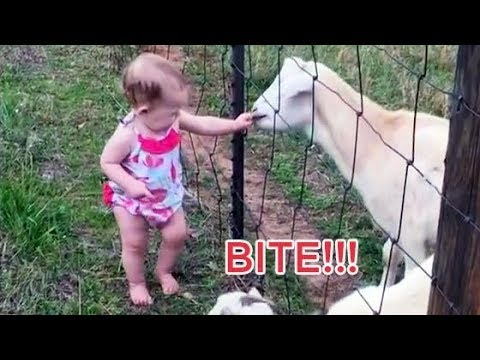 CUTE BABIES vs ANIMALS Compilation 2018 -  TRY NOT TO AWW!!!