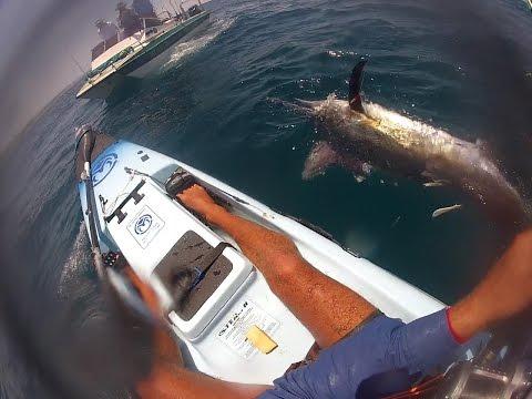 Black Marlin Vs  Kayak Fisherman