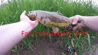Creek Fishing For Brown Trout -Montana Summer Fishing