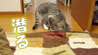 猫が敷布団の下に潜っていく - the cat gets under the rug - thumbnail
