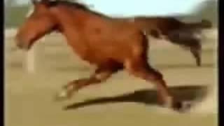 Le cheval a deux pattes