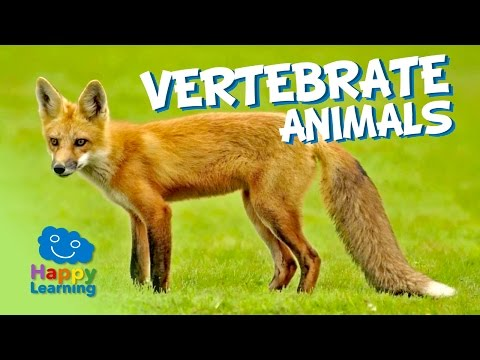 Vertebrate Animals | Educational Video for Kids